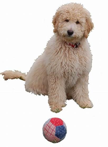 Hundeschule Momo Bremen Junghunde Welpen Ihre