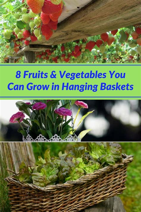 fruits vegetables   grow  hanging baskets