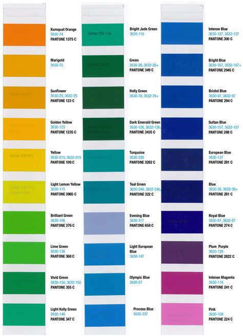 translucent color chart sign anatomy