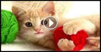 Funny Cats 2015   Funn...