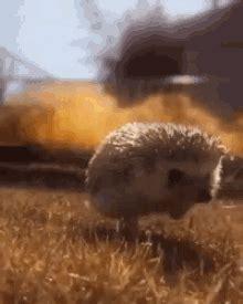 Hedgehog GIFs | Tenor