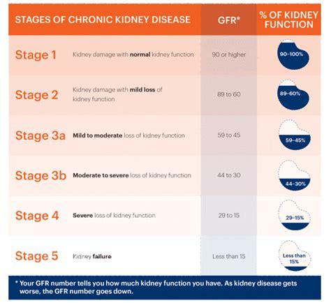 사구체여과율(Glomerular Filtration Rate ; GFR)과 신기능(kidney