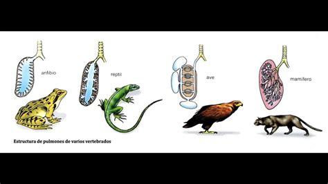 la respiraci 211 n de los animales ciencias naturales youtube