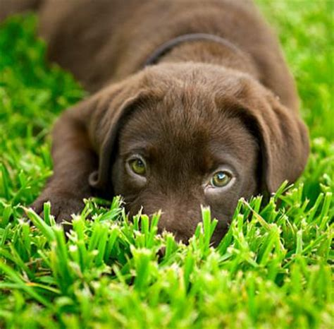 puppy names  meanings slideshow