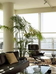 Palmen Frs Wohnzimmer Die Das Zimmer Zweifellos Erfrischen