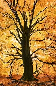 Baum An Wand Malen : baum an wand in flur malen unser buntes zuhause baum wald und alte b ume ~ Frokenaadalensverden.com Haus und Dekorationen