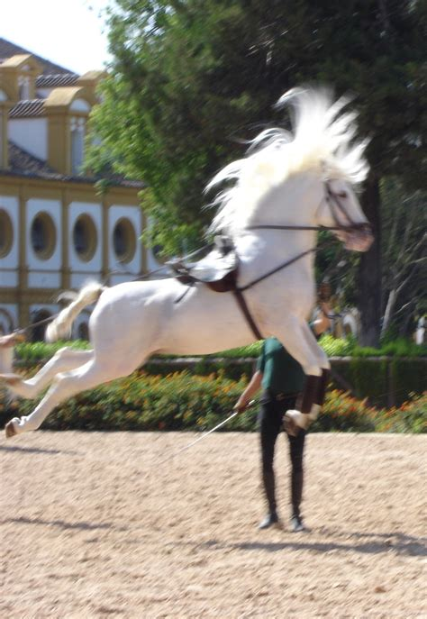 andalusian horses dancing jerez magnificent spain