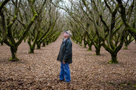 pruning hazelnut trees waaaaaay overgrown hazelnut help