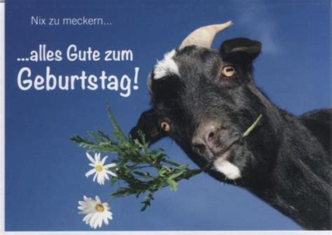 geburtstagskarte lustig kuh tiermotiv nix zu meckern