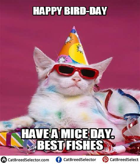 happy birthday cat memes cat breed selector