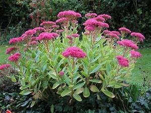 Garten Im Herbst : deko ideen garten mit herbstblumen f r eine gute stimmung im herbst ~ Whattoseeinmadrid.com Haus und Dekorationen