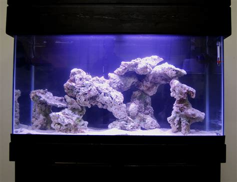 Aquascape Live Rock by Live Rock Aquascape Designs Live Rock Set Up Idea Fish