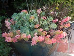 Succulent Plant Containers and Pots