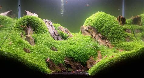 Aquascaping Forum - quot light quot 50l scaperstank aquarienvorstellung