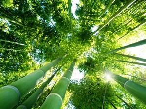 Bambus Im Garten Vernichten : bambus vernichten bambus dauerhaft entfernen ~ Michelbontemps.com Haus und Dekorationen