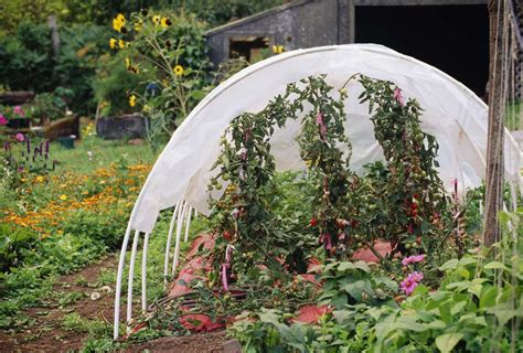 build a mini hoop house for winter gardening