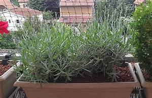 Plantes Et Fleurs Pour Balcon : quelle plante mettre sur un balcon en plein soleil ~ Premium-room.com Idées de Décoration