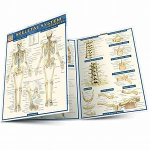 Quickstudy Skeletal System Advanced Laminated Study Guide