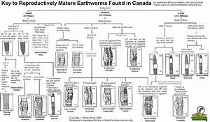 Identifying Earthworms