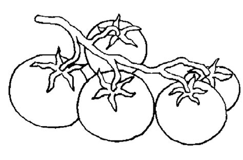 cuisine tomate tomate cerise dessin
