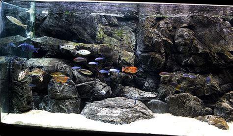home cichlid fishtank pangea  aquarium background