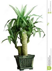 Plante Verte Chambre by Plante Verte De Chambre Photos Libres De Droits Image