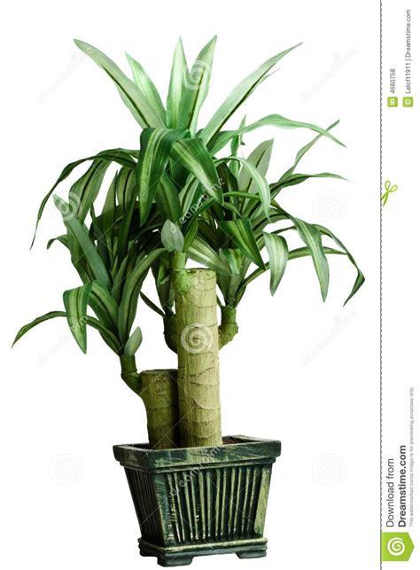 plante verte pour chambre plante verte de chambre photos libres de droits image