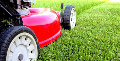 How To Care For Your Lawn Turf
