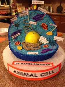 10 Trendy 3d Animal Cell Model Project Ideas 2020