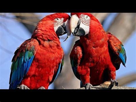 Parrots Majestic Birds Documentarytube