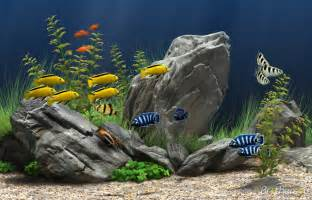 floor and decor jacksonville florida free aquarium wallpaper