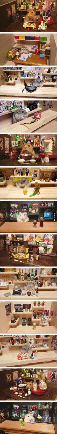 image result  hamster names male pets pinterest