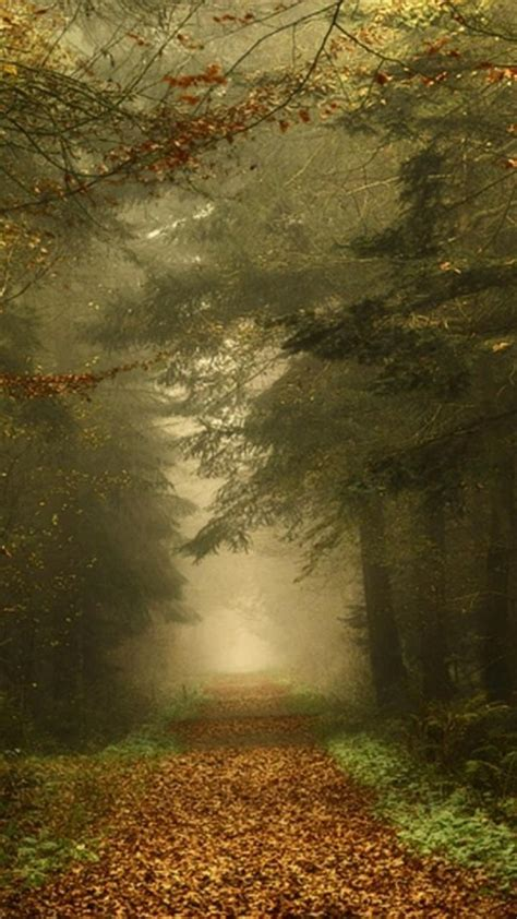 dawn forests paths fog mystical autumn leaves wallpaper