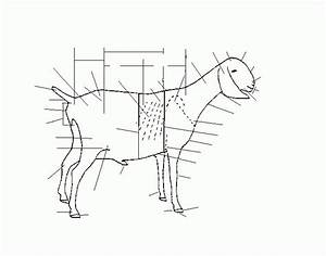 The Parts Of A Meat Goat