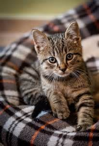 names for gray cats gray and black tabby cat names