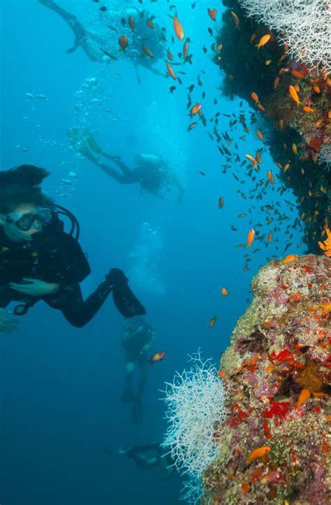 maldives originaldiving guardado desde