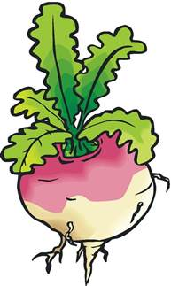 turnip clipart clipground