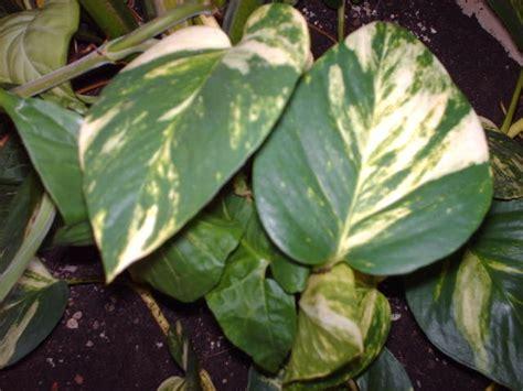 plante verte appartement florideeo