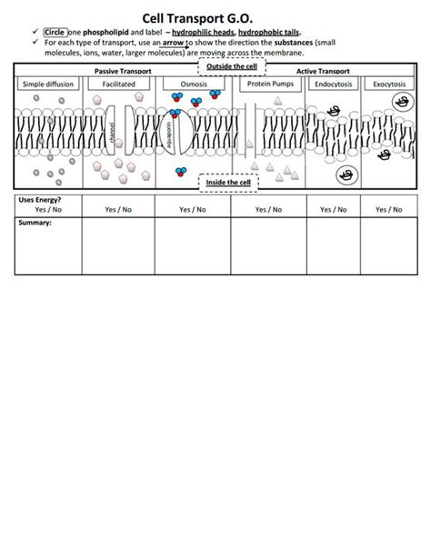 cell transport worksheet free worksheets library