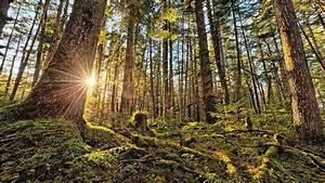 Bilder Vom Wald : waldspazierg nge darum tut uns der wald so gut beobachter ~ Yasmunasinghe.com Haus und Dekorationen