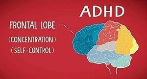 What Causes Adhd  Comparing Facts And Myths