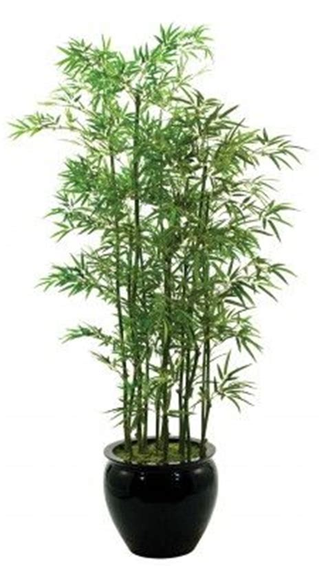 25 best ideas about bamboo planter on bamboo