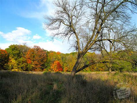 FREE Bare Trees in Autumn Photo, Fall Foliage, Autumn ...