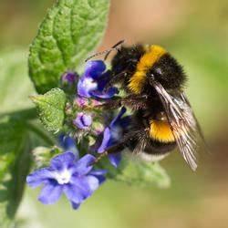 Schmetterlinge überwintern Helfen : 10 tipps f r mehr n tzliche insekten im garten mein sch ner garten ~ Frokenaadalensverden.com Haus und Dekorationen