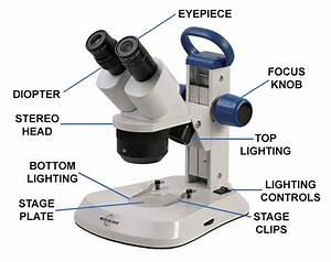 What Is A Stereo Microscope