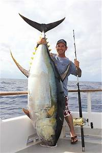 Big Fishes of the World: YELLOWFIN TUNA page 2