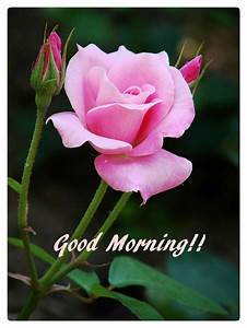 3945 best good morning images on Pinterest | Good morning ...