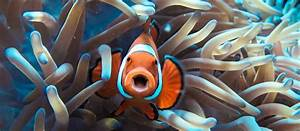 Where To Find Dory And Friends On The Great Barrier Reef