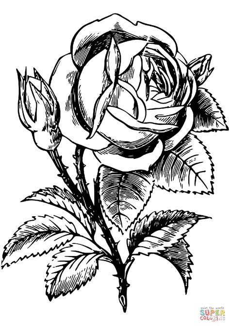 Rose coloring page | Free Printable Coloring Pages