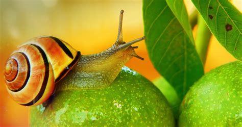 snail venom boasts potentially blood sugar balancing